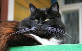 Обои кошка, животные, усы, деревня, кошки, крыльцо