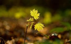 Картинка листья, фон, растение, росток