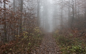 Картинка осень, лес, листва, тропа, Туман, forest, листопад, роща, autumn, leaves, fog, path