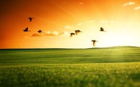 Картинка поле, небо, солнце, пейзаж, закат, птицы, природа, зеленое, лебеди, летят, обои от lolita777