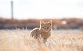Картинка grass, field, cat, sunny