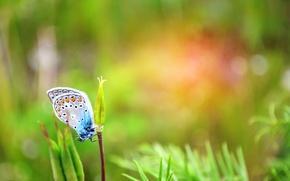 Картинка зелень, лето, трава, бабочка, день