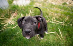 Картинка глаза, взгляд, собака, размытость, мардашка