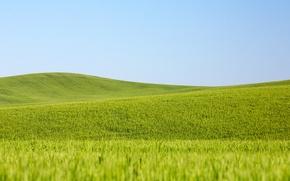 Обои поля пшеницы, сельская местность, пшеница, поле, небо, фермы, линии