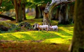 Картинка природа, парк, поросята