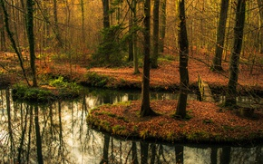 Картинка forest, bridge, autumn, reflection, pond, mirror