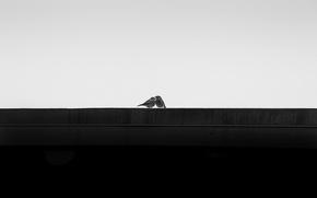 Обои You & Me, фон, птицы