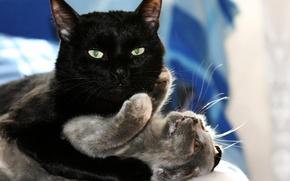 Обои кошка, любовь, игры, котенок, объятия, love, черный кот, kitten, hug, cats, playing, black cat