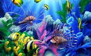 Обои море, рыбы, подводный мир
