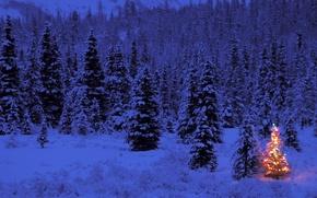 Обои огни, елка, новый год, вечер, зима