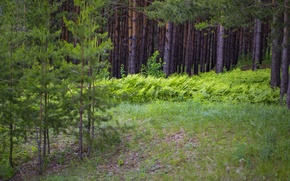 Картинка лето, деревья, Лес, чаща