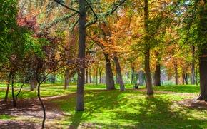 Картинка деревья, парк, Осень, trees, park, autumn
