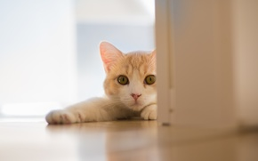 Картинка кошка, © Ben Torode, Hannah