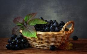 Картинка листья, ягоды, виноград, корзинка