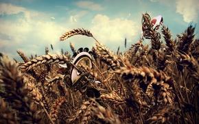 Обои обработка, пшеница, поле, облака