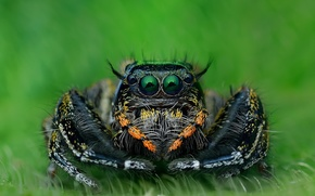 Обои макро, паук, природа