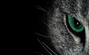 Картинка усы, взгляд, глаз, фон, кошак, котяра
