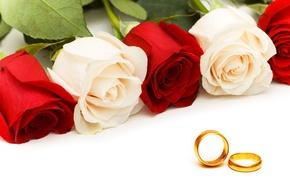 Картинка розы, кольца, rose, ring, обручальные, Wedding