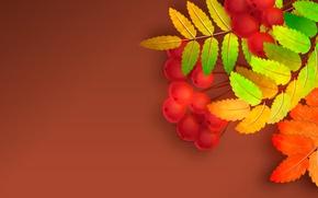 Картинка осень, листья, рябина