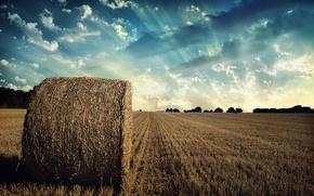 Обои longhorn, небо, поле