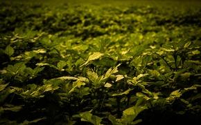 Картинка Green, Autumn, Field, Plants, Lush