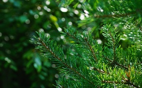 Картинка лучи, свет, иголки, зеленый, Дерево, пятна, боке