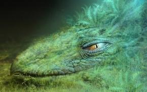 Обои зеленый, Дракон, Трава, Голова
