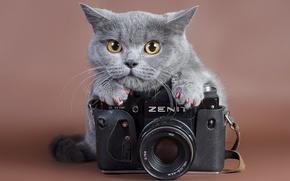 Картинка кошка, взгляд, zenit