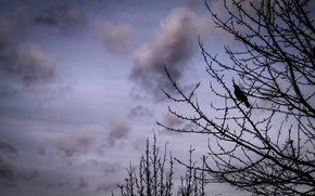 Картинка Clouds, Sky, Winter, Tree, Bird, Branches, Crow