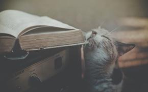 Картинка кот, книга, приёмник