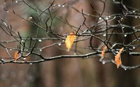 Картинка макро, лист, ветка