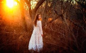 Картинка лес, девушка, солнце, платье