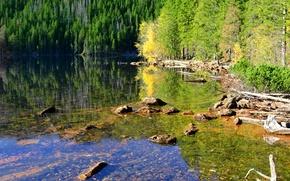 Картинка лес, вода, деревья, озеро, отражение, камни, Чехия, солнечно, коряги