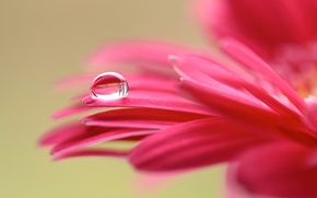 Картинка цветок, макро, капля