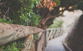 Картинка листья, деревья, природа, фон, обои, листва, забор, тропинка