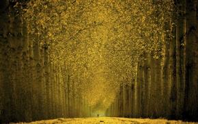 Картинка Деревья, Листья, Аллея, Золото