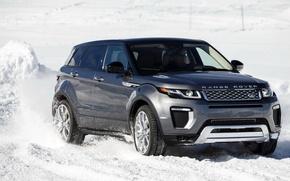 Обои Evoque, suv, Land Rover, Range Rover, автомобиль, Autobiography, car, передок, внедорожник