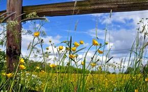 Обои лето, забор, цветы, природа
