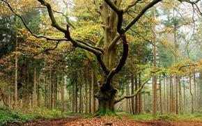 Картинка осень, лес, листья, деревья, forest, Nature, листопад, trees, autumn, leaves, fall