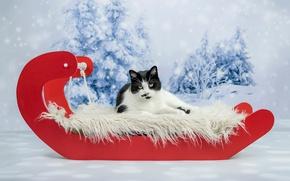 Обои кот, фотосессия, новый год, кошачья сказка, рождество, фон, снег, лежит, кошка, красный, ели, мех, черно-белый, ...