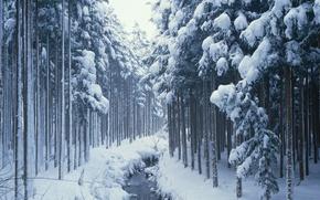 Картинка зима, лес, снег, ручей, Природа