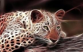 Обои леопард, кошка, хищник