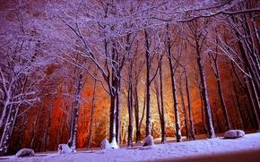 Картинка парк, свет, снег, зима, деревья, лес