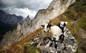 Картинка горы, природа, козёл