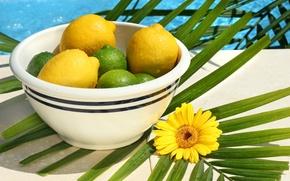 Картинка море, цветок, солнце, желтый, зеленый, лимон, лайм, гербер