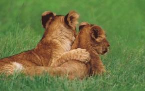 Картинка трава, кошки, львята, друзья