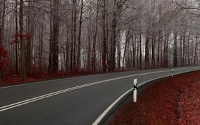 Картинка дорога, деревья, природа, путь, пейзажи, дороги, тропинка