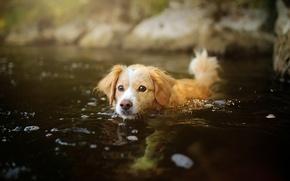 Картинка вода, собака, щенок
