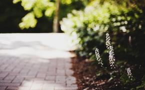 Картинка листья, макро, цветы, зеленый, фон, widescreen, обои, размытие, wallpaper, цветочки, flower, широкоформатные, flowers, background, macro, …