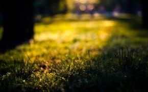 Картинка лето, трава, солнце, макро, боке